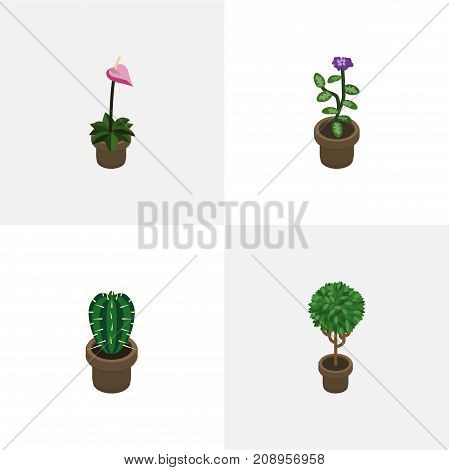 Isometric Flower Set Of Grower, Flower, Peyote And Other Vector Objects
