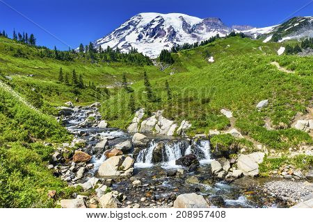 Bistort Wildflowers Edith Creek Mount Rainier Snow Mountain Paradise Mount Rainier National Park Washington