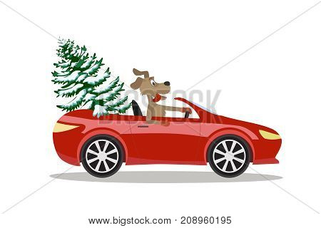 The dog carries a tree in a red sports car. Vector for New year