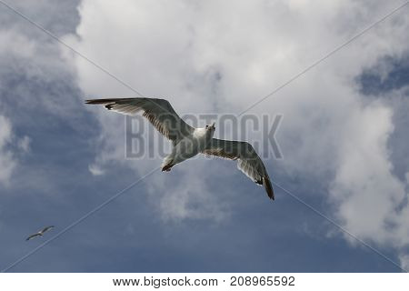 A white seagull is flying over sea