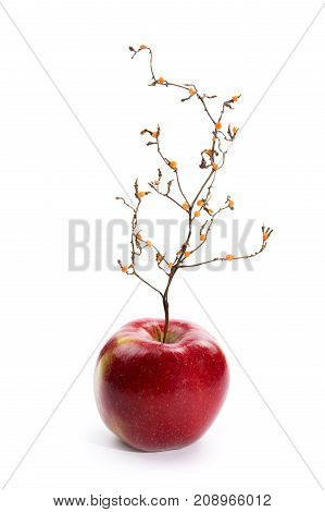 Ripe red apple with a plant like a tree.