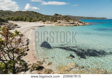 Deserted Sandy Beach And Translucent Sea In Corsica