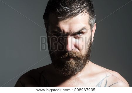 Man with long beard and mustache. Guy with naked shoulder on grey background. Barber fashion and tattoo beauty. Feeling and emotions. Hipster with serious face