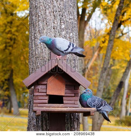 A house for birds or a squirrel on a tree. Birds in a birdhouse. An empty house for birds in the forest