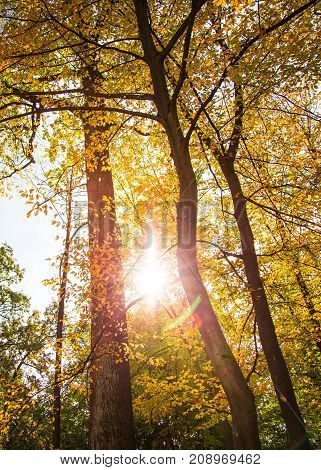 Autumn forest in a nice sunny day. Yellow autumn nature background.