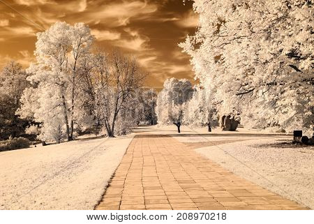 Paved Road In Forest Park. Infrared Image
