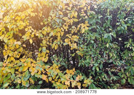 Yellowed plant in autumn, the sun in backlight. Yellowed autumn bush as a background. Abstraction.