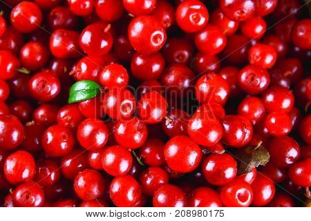 Cowberry, Foxberry, Cranberry, Lingonberry Texture, Top View.