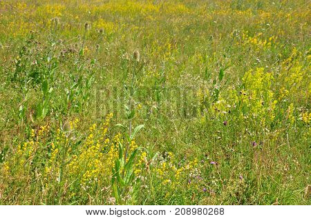Colorful and crisp image of fallow land
