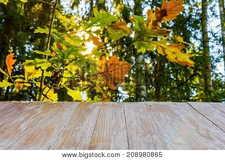 Empty Rustic Wood Table Top On Blurred Forest Background And Penetrating Sun Rays At Summer. Can Mon