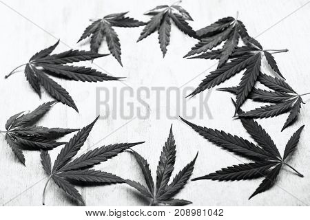 The Leaves Of Marijuana, Herbs, And Cannabis Lie In A Circle Forming A Good Background For Your Insc