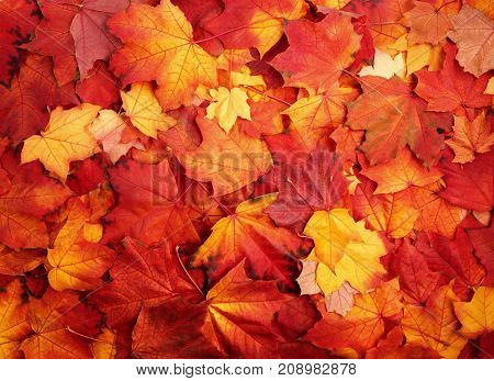 Red and Orange Autumn season Leaves Background