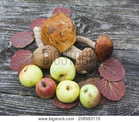 autumn theme still life on wooden background