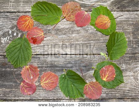 the autumn theme frame on wooden background