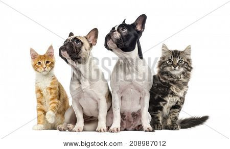 Group of cats and dogs sitting together, isolated on white