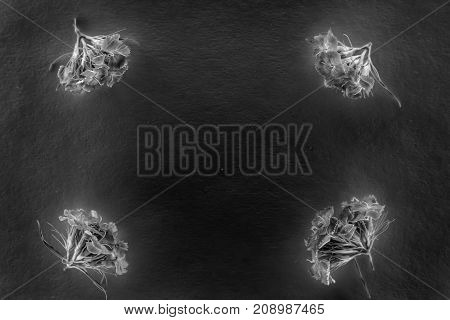 Composition of flowers in neon light black and white poster