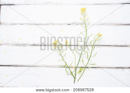 Beautiful flower on wooden table and old