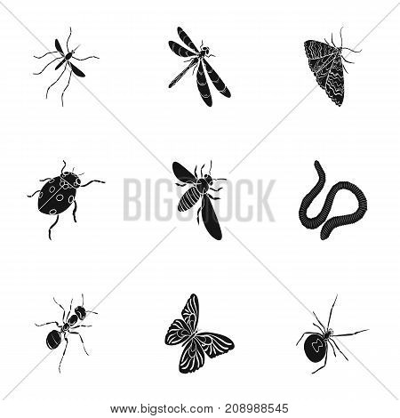 Beetle, wasp, bee, ant, fly, spider, mosquito and other insect species. Various insects set collection icons in black style vector symbol stock isometric illustration .