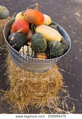 Pumpkins gourds and winter squash in a galvanized metal container with handles photographed from above. Loose straw is visible on the pavement.