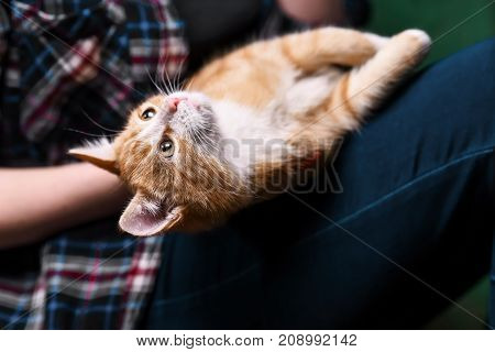 Kitten sitting on hands at the girl