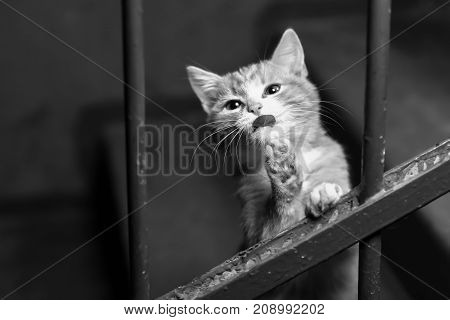 Homeless ginger kitten in the entrance black and white poster