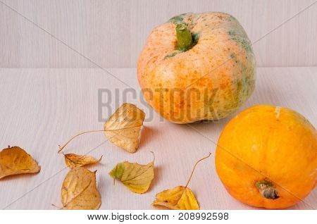 Two Pumpkins And Autumn Leaves On A Table