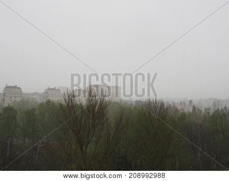 The View From The Window Is Snow, Snow On A Background Of Green Trees, Bad Weather