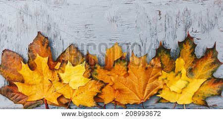 Autumn Background Foliage, Border, Fall Colored Leaves  Texture .top View. Maple Tree Leafs, Beautif