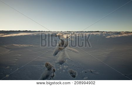 photo of a person tracks in the snow left over hill