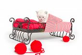 cat, kitty, kitten, feline, pet, mammal, cute, adorable, laying, resting, animals, baby, white, background, bed, stripes poster