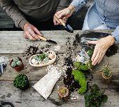 Couple making a terrarium with miniature plants poster