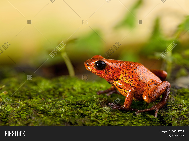 Red Frog Terrarium Image Photo Free Trial Bigstock