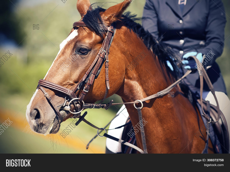 On Beautiful Bay Horse Image Photo Free Trial Bigstock