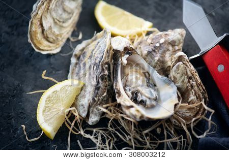 Fresh Oysters close-up with knife, served table with oysters and lemon. Healthy sea food. Oyster dinner in restaurant. Dark background. Seafood, Gourmet food. Flatlay, top view