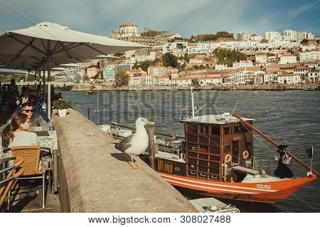 Porto, Portugal: Old City With Douro River, Riverboats, Tourists And Seagull Bird, Like Symbol Of Ar