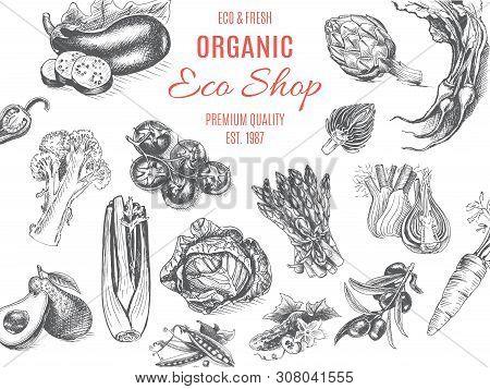 Organic Farm Shop. Vector Sketch Of Vegetables.