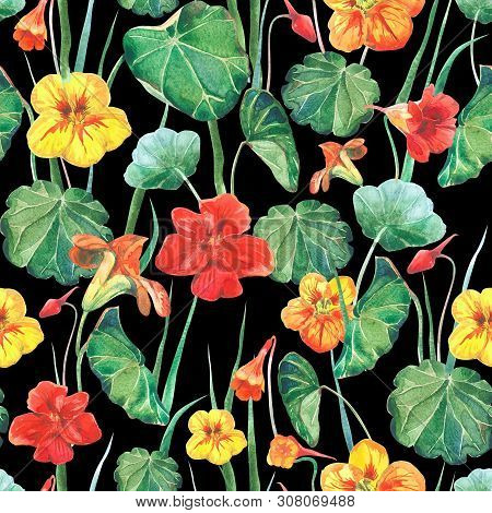Seamless Watercolor Fabric Background Of Nasturtium Flowers And Leaves. Old Style Black Background.