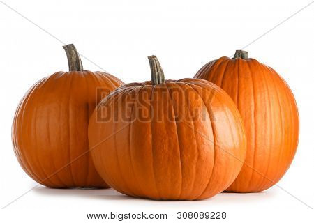 Three perfect orange pumpkins isolated on white background , Halloween concept