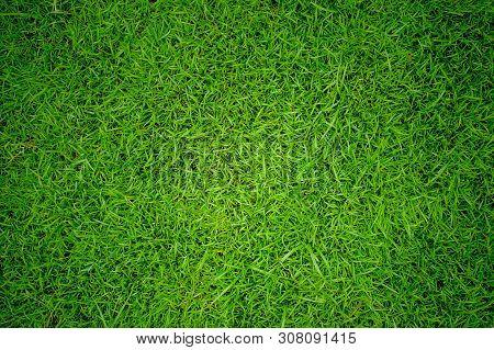 Green Grass Texture Background, Green Lawn, Backyard For Background, Grass Texture, Green Lawn Deskt
