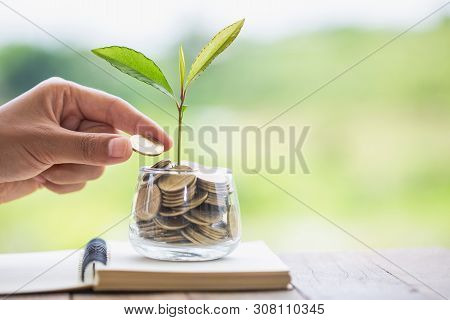 Hand Giving A Coin To A Tree Growing From Pile Of Coins.plant Growing In Savings Coins Money. Green