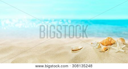 Shells on sandy beach. Summer. A great place for a holiday.
