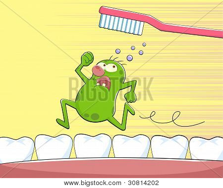 tooth germ