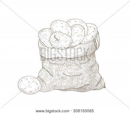 Monochrome Drawing Of Potato Tubers In Burlap Bag. Harvested Tuberous Food Crops. Natural Organic Ve