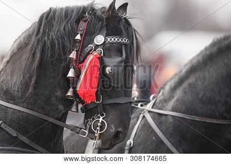 Details with an adorned horse in rural Romania poster