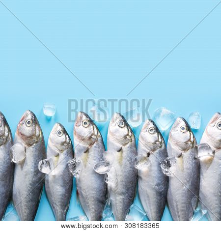 Fresh Bluefish With Ice Cube On Blue. Fish Pattern With Space For Text. View From Above.