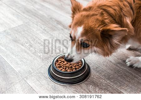Portrait Of A Dog With A Bowl Of Dry Food. Eats Close Up. Dog Diet Concept