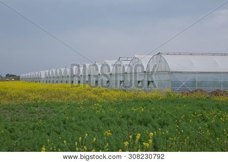 Greenhouses Greenhouses Glass Seedlings Of Flowers And Plants The Nature Of The Greenery Growing Flo