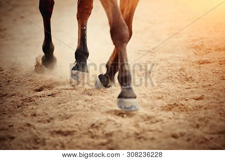 Dust Under The Horse's Hooves.
