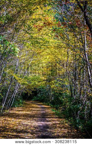 Views Along Virginia Creeper Trail During Autumn