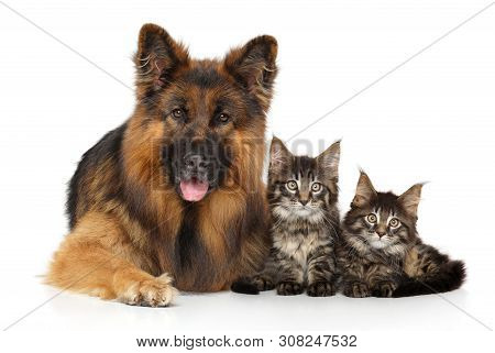 Portrait Of A Dog And Kittens Lying On A White Background